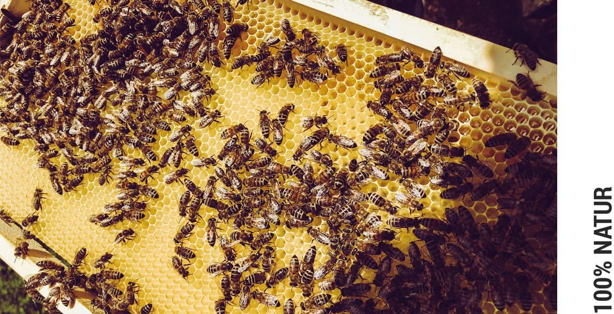 Bienenhof Zillertal Bienen 100% Natur ohne Zusatzstoffe